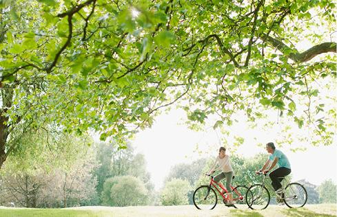 Large tree with two people on bicycles
